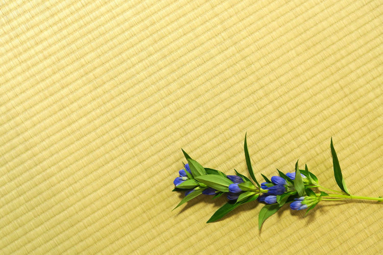 Close-up of yellow flowers on floor