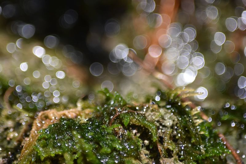 Fresh water fountain Bokeh Moss & Lichen Plant No People Water Close-up Wet Drop Selective Focus Beauty In Nature Green Color Growth Focus On Foreground Tranquility Freshness