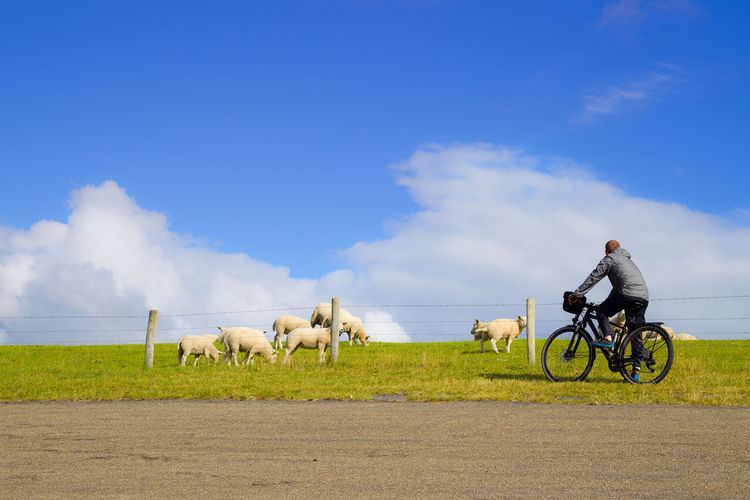 Young man is riding a bike on a dyke on the North Sea Cycle Route near Harlingen, the Netherlands Fun Green Adult Bicycle Bike Cloud - Sky Dike Farming Grass Leisure Activity Mammal Nature One Man Only One Person Outdoors People Riding Road Sky Sport Sportive Transportation