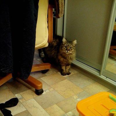 #cat #cats #instacats #2013 #catsofinstagram #catsagram #we_love_cats Cat Cats 2013 Catsofinstagram Catsagram Instacats We_love_cats