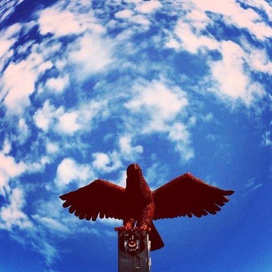 Black Eagle ⚫️⚪️✌🏻️ BEŞİKTAŞ Besiktas Beşiktaş ❤ Blackandwhite Blackeagle Karakartal Kartaliçe Asyakartallari