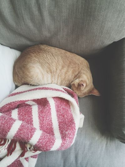 Cat Lovers Cats Of EyeEm Cat Sleeping Positions Cat Sleep Cute Kitty Cute Cute Cat Orange Cat Fat Cat Cute Fat Cat