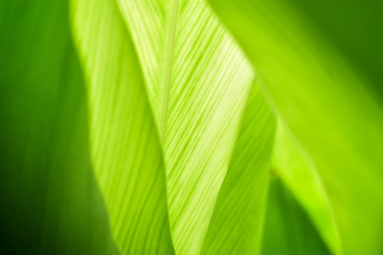 Green color of