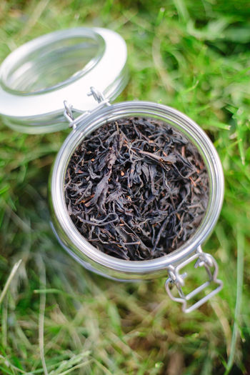 High angle view of plants in jar on field
