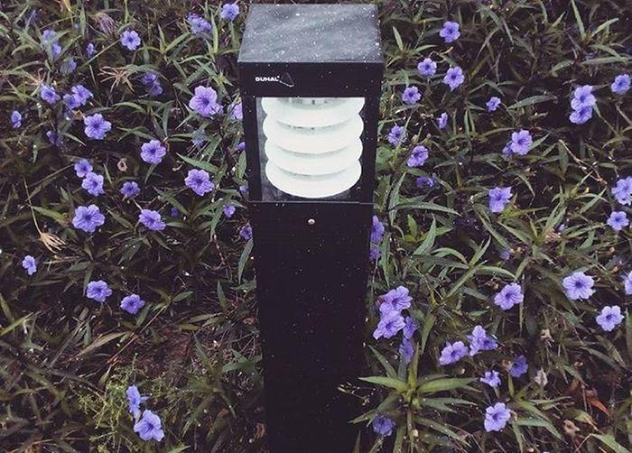 Chỉ là ghé lại chụp cái trụ điện và đám hoa =))))) Thật ra có ý nghĩa đấy. Flowers Light Violet Green Chụptàolao Chụptùmlum Chụpnhảm Nhưngthích Ahihi