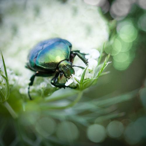 Bug Nature
