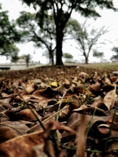 Autumn Dead Leaves Tree Leaf Close-up Sky Plant Blooming In Bloom Growing Thorn Plant Life Botany Blossom