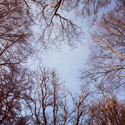 Небеса необетованные небо Лес сырец Syrets sky forest