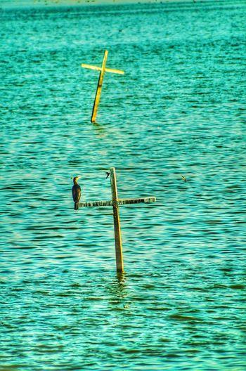 FLIGHT OF FAITH Water Lake Bird Cross Openwater