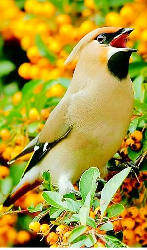 Bird One Animal Animal Wildlife Nature Multi Colored Close-up No People Outdoors Beauty In Nature Day Perching بغداديات بغدادي بغداد ❤ Illuminated Dome Sky Dusk City Architecture Cityscape Building Exterior Religion بغداد_العامرية بغداد