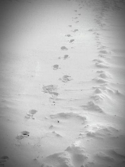 FootPrintsInTheSnow Taking Photos Enjoying Life Today's Hot Look My Photography North Dakota NorthDakotaLiving ❄⛄ NorthDakotaWinter WinterOf2015 Black&white