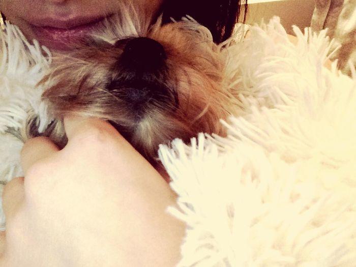 Monbb Mon Iench Babydog Lovedog Toutoune💖