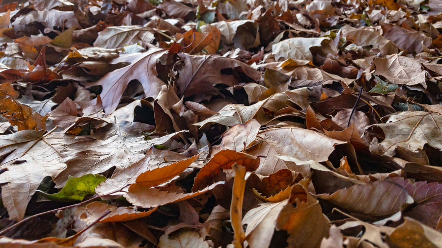 My romance doesn't need a castle Autumn Backgrounds Beauty In Nature Change Close-up Day Dry Fragility Full Frame Leaf Leaves Nature No People Outdoors
