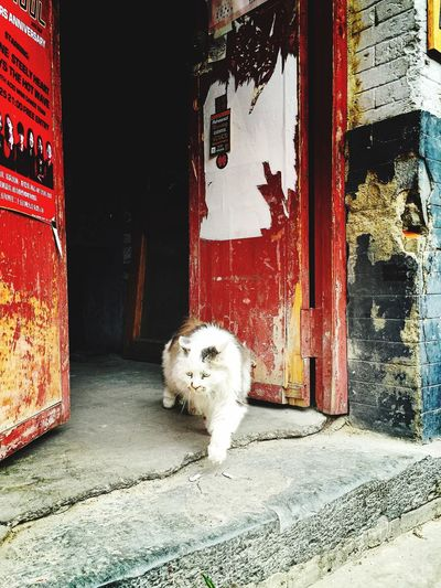 The Summer Palace IPhone6 Plus My Smartphone Life Lama Temple Hutong Cat