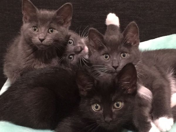 Always Be Cozy Cuddles Kittensnuggles Kittens Of Eyeem Kittens Domestic Cat Animal Themes Looking At Camera Domestic Animals Pets Mammal Portrait Feline Young Animal Indoors  Whisker Cat No People Close-up Togetherness Day