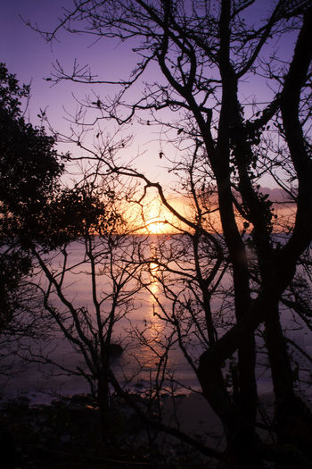 Beg-Meil Backlighting Photography Bare Tree Beauty In Nature Branch Day Lake Nature No People Outdoors Scenics Silhouette Sky Sun Sunrise Sunset Tranquil Scene Tranquility Tree Water