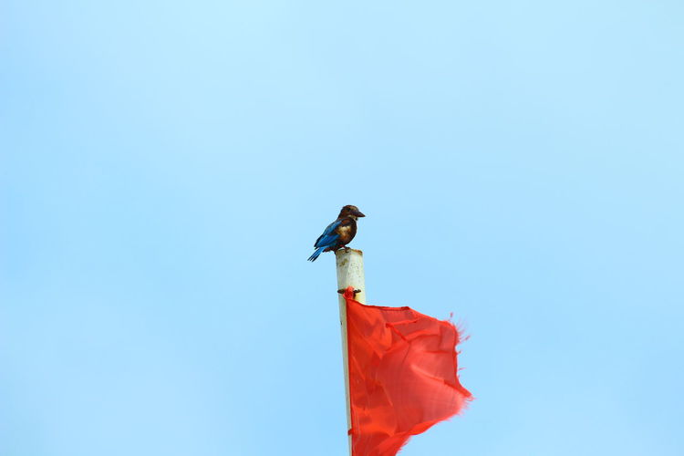Close-Up Of Bird Perching On Flag Pole Against Clear Sky