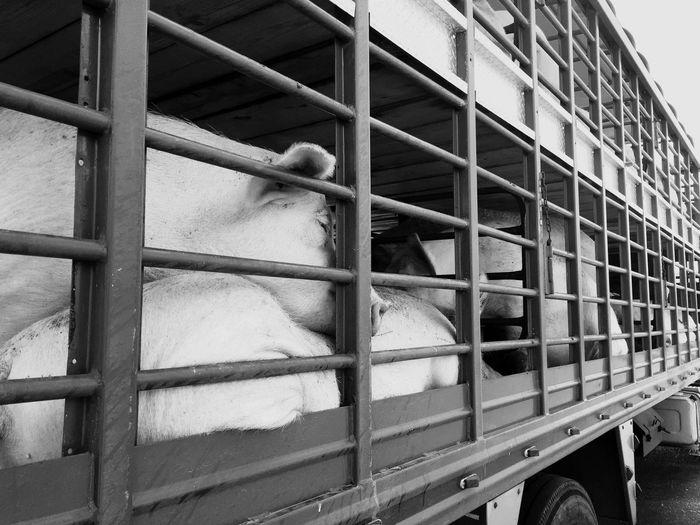 El sueño antes del Sueño Black & White On The Road
