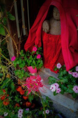 Face Tokyo,Japan Streetphotography Street Plants Flower Imagine Manjusaka Jizou