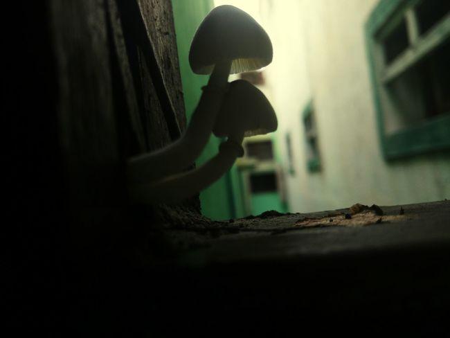 Life of a mushroom .