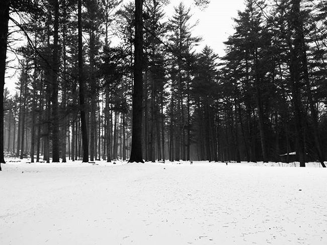 ❄White blanket❄ . . . . . December Newhampshire Newengland Snow Snowy Storm Park Exploring Trees Landscape Nature Naturelovers Hiking Adventure Bnw_life Bnw_captures Bnw_society Bnw Scenery Blackandwhite Monochrome TransformationTuesday Beautiful Travel Outside northeast mobilephotography androidography iphonography goodmorning