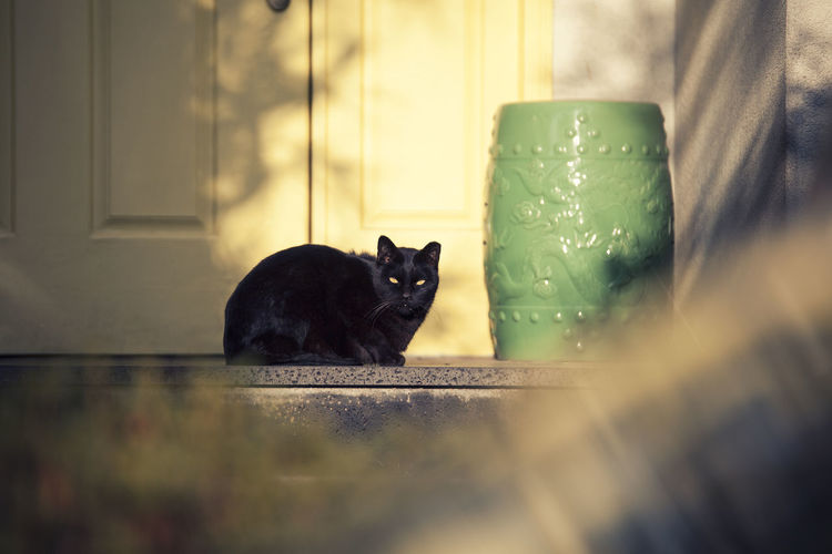 Pets Domestic Domestic Animals Mammal Animal Themes Animal One Animal Domestic Cat Vertebrate Cat Feline No People Selective Focus Relaxation Day Black Color Sitting Indoors  Portrait Glass - Material Whisker