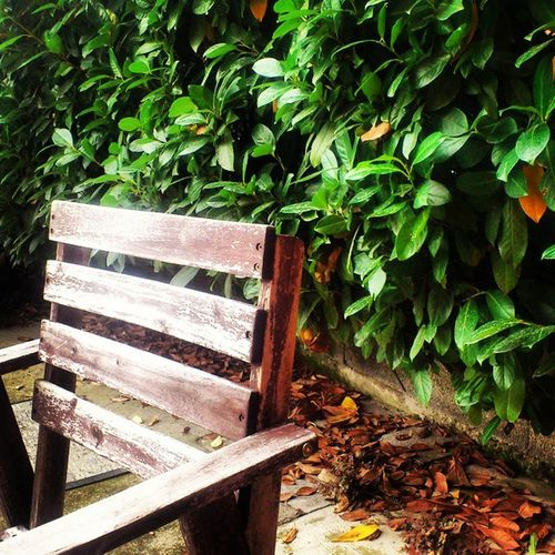 Autumn Wood Chair Seat Green Leafleaves Colors Picture Likevintage
