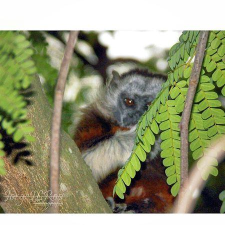 Adventure Club Panasonic Dmc Lz40 Jilroa Paisaje Natural Colombia Art Paisaje Colombiano Colombia Es Bella Naturaleza En La Ciudad