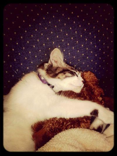 Beautiful ♥ Cat♡ Sleep Cute Pets Tu Eres El Aire Que Dia A dia necesito para vivir♡