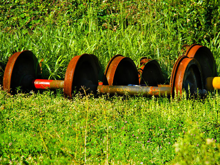 Abundance Beauty In Nature Close-up Day Field Grass Grass Grassy Green Green Color Growth Iron Lawn Lush Foliage Nature No People Outdoors Plant Rural Scene Selective Focus Side By Side Tranquility Wheels Train