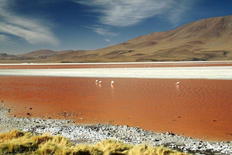 Flamingos in lake against sky