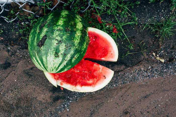 Found on the day of Cinco de Mayo celebrations, ironically with the same colors as the Mexican flag. Sunset Park, New York, 2017 EyeEmNewHereFruityStreetphotographySunsetparkUSACinco De Mayo Cincodemayo EyeEmNewHere Food Fruit Green Color New York New York City Watermelon The Street Photographer - 2017 EyeEm Awards Place Of Heart