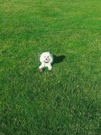 Puppy Animals Cute Pets Little Dog Open Field