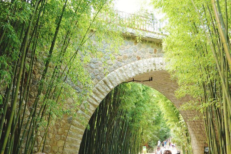 Le pont de pierre de la Bambouseraie Stone Bridge Railway Bridge La Bambouseraie Anduze Holiday Memories South France