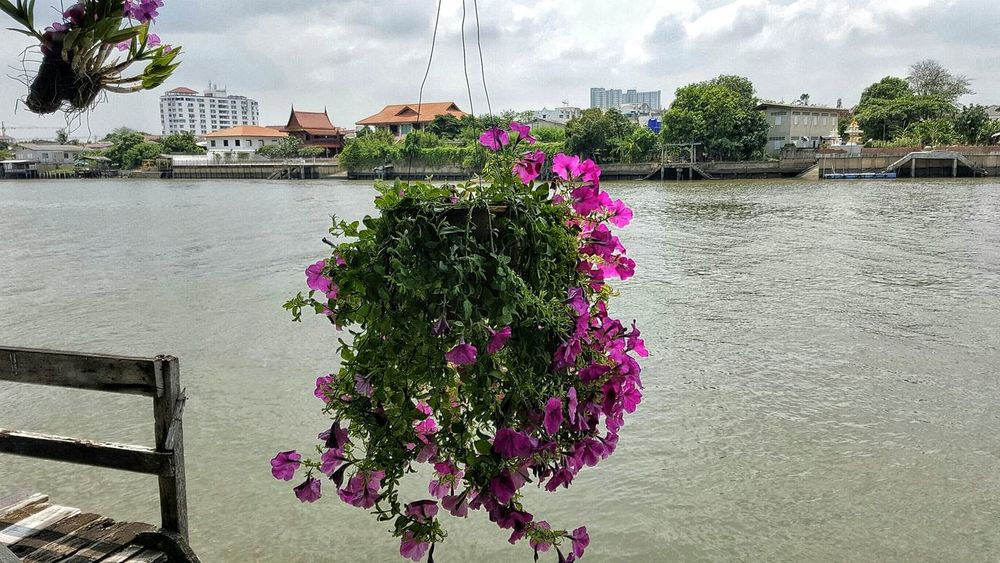 Building Exterior Architecture Built Structure Growth Flower City Freshness Pink Color Fragility Water Nature Plant Blossom Sky City Life In Bloom Springtime Day Outdoors Growing