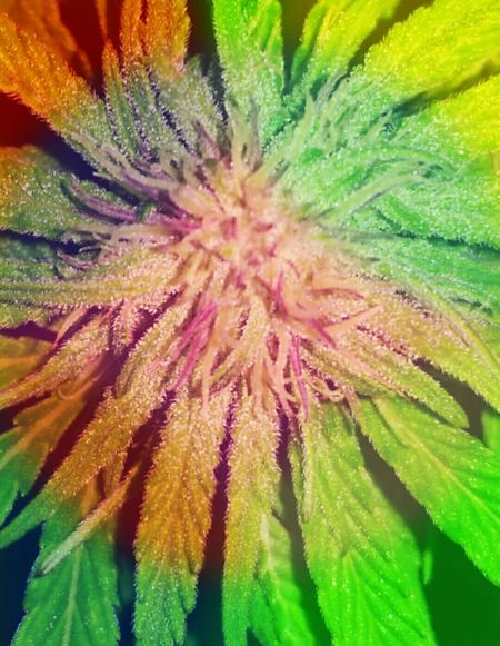 Ligalize It For Happy Summer Cannabis.👌🍁 Cannabis Clubhouse Ligalize Cannabis