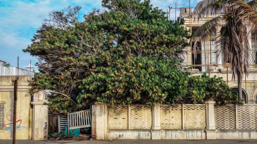 The abandoned villa EyeEm Best Shots EyeEmNewHere EyeEm EyeEm Nature Lover Low Angle View Landscape Scenery Beauty In Nature Yellow Colors Perspective Photography Frame Green Color Nature Adventure The Street Photographer - 2018 EyeEm Awards Tree Palm Tree Sky Architecture Building Exterior Built Structure Plant Growing Creeper Historic Closed Passageway Building The Traveler - 2018 EyeEm Awards The Creative - 2018 EyeEm Awards The Architect - 2018 EyeEm Awards