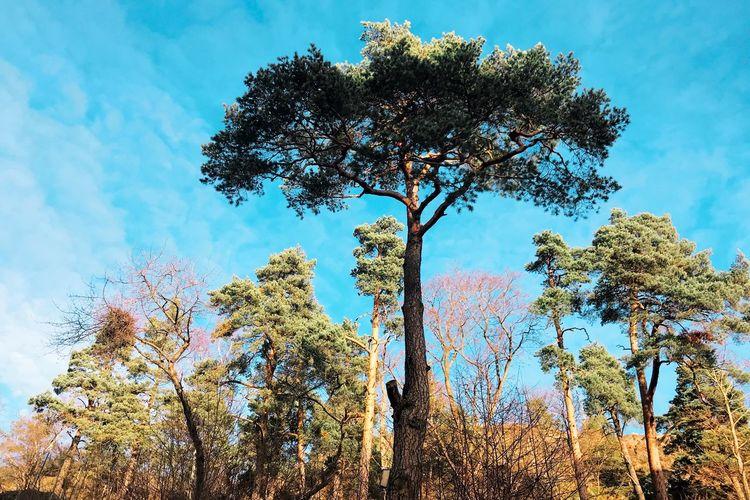 Oh mighty tree