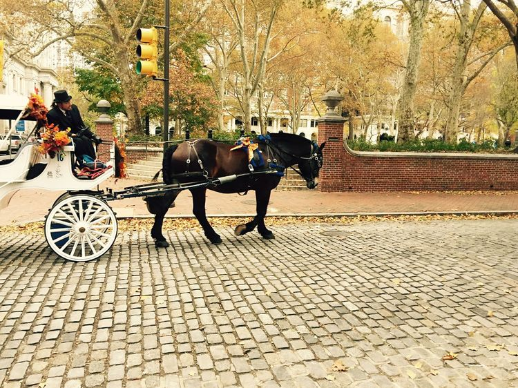 Independence National Historic Park History Through The Lens  Philadelphia Philly Horse Horses Wagon  I Love My City Discover Your City Taking Photos Travel Photography RePicture Travel Streetphotography Historical Monuments Historical Place Historical Building Horse Wagon Pensylvania USA IPhoneography