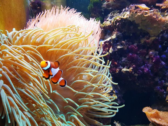 View of clown fish in water