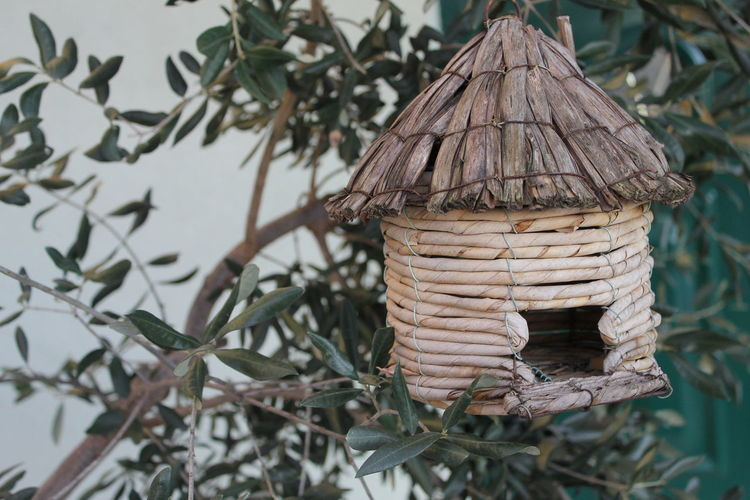 Close-up of birdhouse on plant