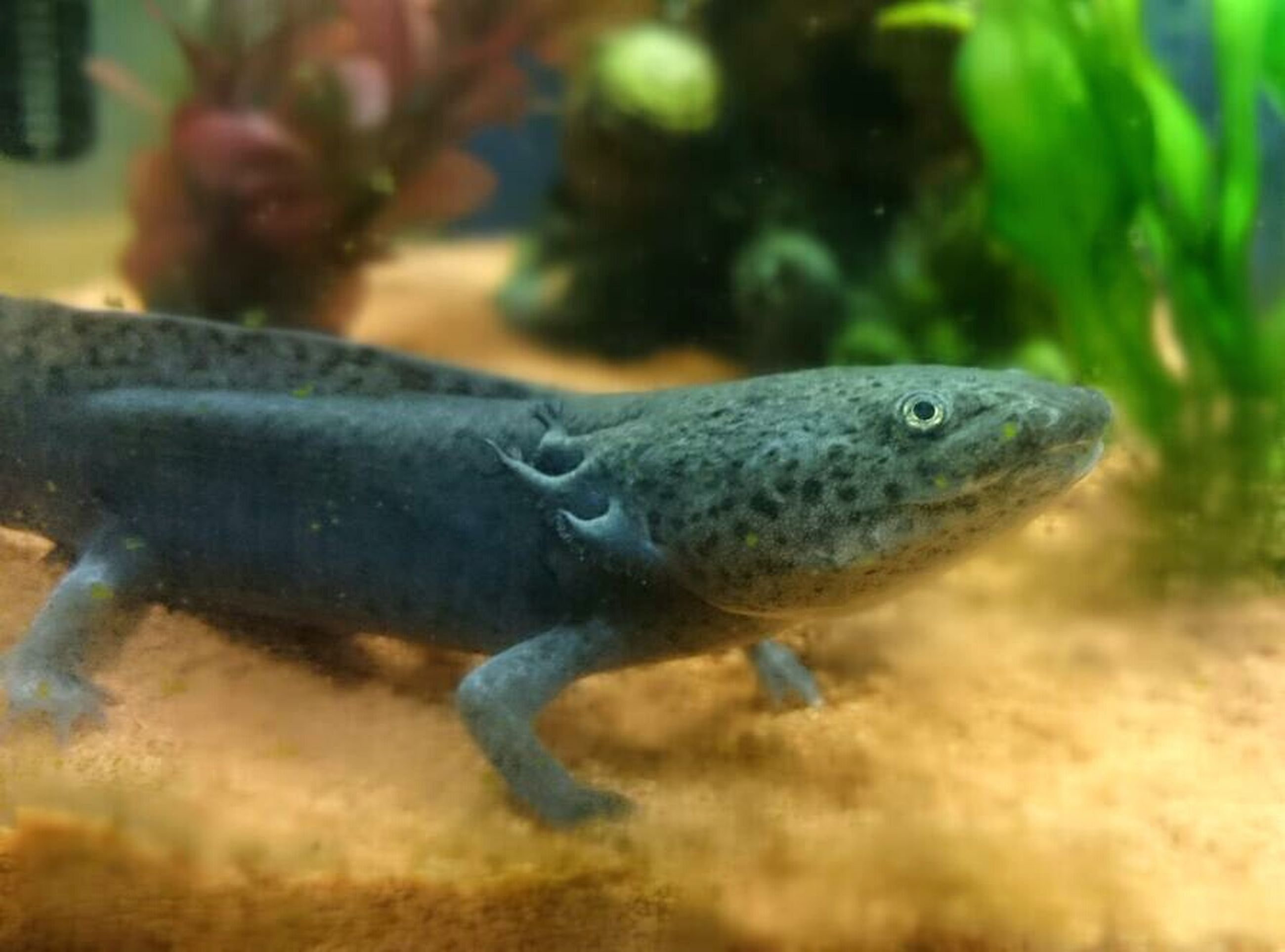 animal themes, animals in the wild, one animal, wildlife, close-up, side view, reptile, focus on foreground, nature, selective focus, fish, water, full length, zoology, underwater, lizard, outdoors, day, two animals, no people