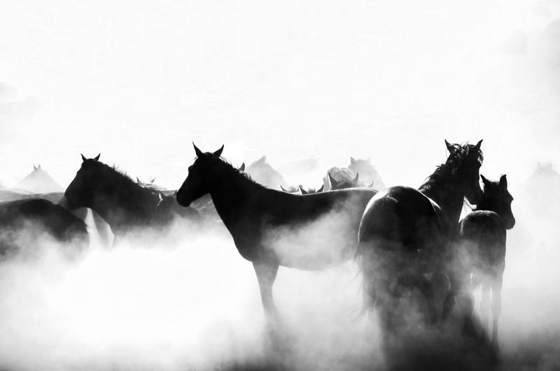 Silhouette horses standing on field against clear sky