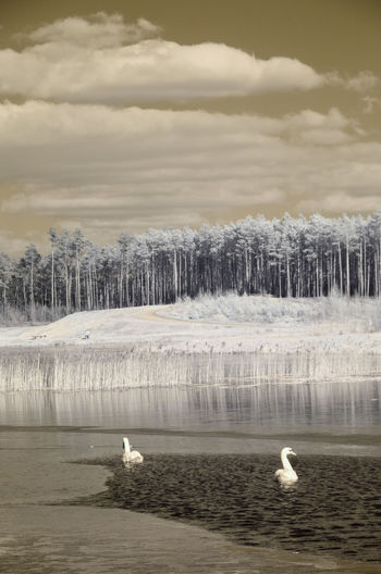 Infrared Trees Winter Activity Cold Cold Temperature Forrest Lake Landscape