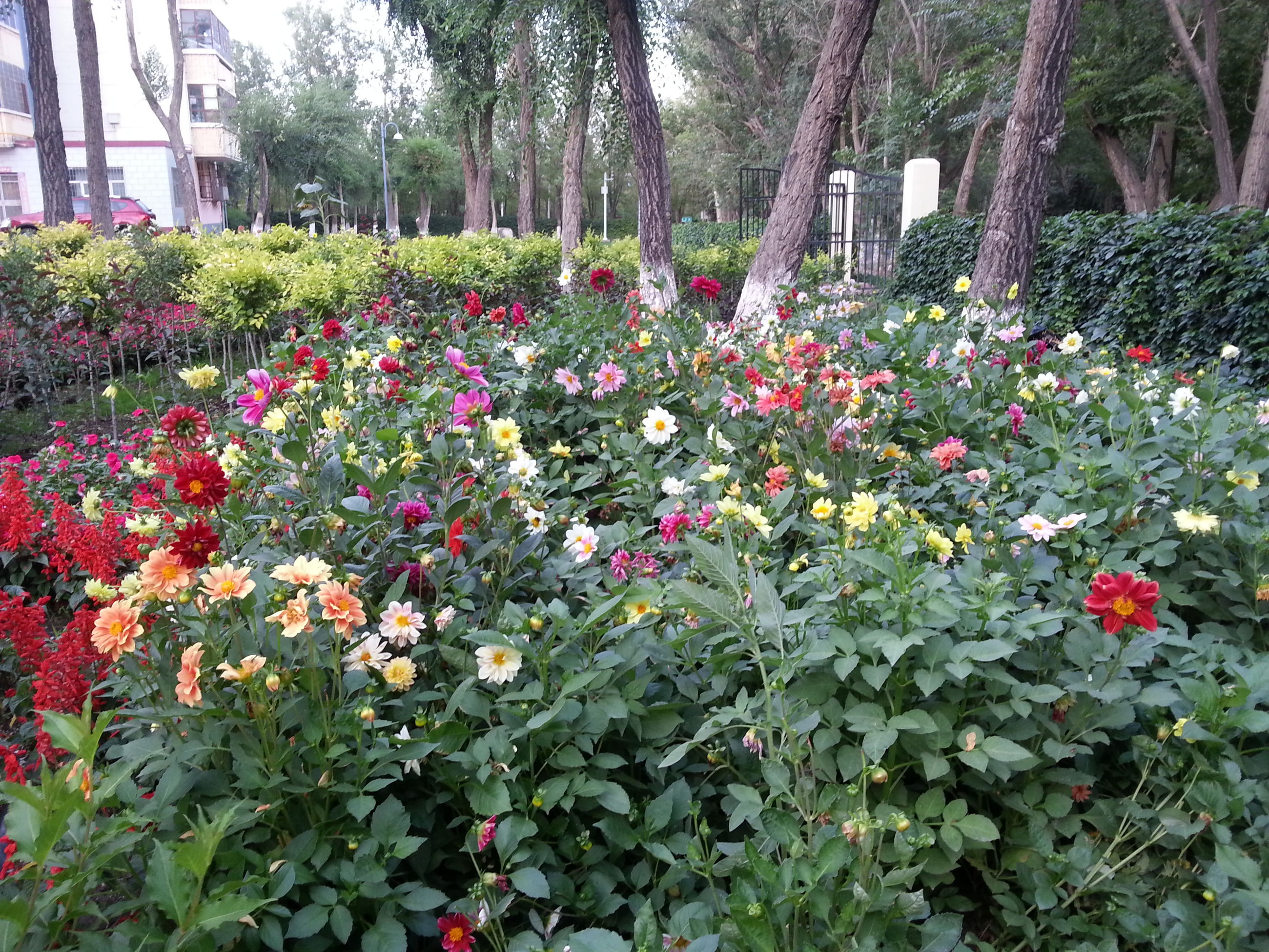 flower, growth, tree, freshness, beauty in nature, plant, nature, green color, leaf, fragility, blooming, park - man made space, in bloom, red, tranquility, blossom, day, lush foliage, growing, formal garden