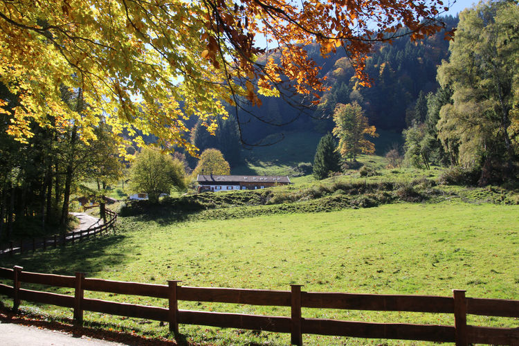 Tegernsee, Bad Wiessee Autumn Beauty In Nature Day Forest Grass Green Color Lake Landscape Nature No People Outdoors Scenics Sky Tranquil Scene Tranquility Tree Water
