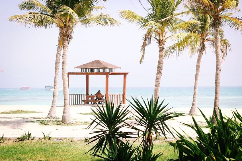 Come talk to me Palm Tree Sea Beach Tree Men Vacations Nature Water Day Horizon Over Water Togetherness Lifestyles Sand Outdoors Beauty In Nature