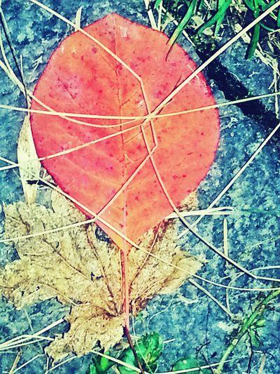 Autumn Litter. Autumn Colors KimberlyJTilley