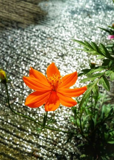 Flower Freshness Fragility Growth Beauty In Nature Nature Petal Flower Head Day Close-up Blooming Leaf Plant No People Water Outdoors