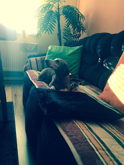 My dog friend :)) Dog Weiner-Dog Cool Animal